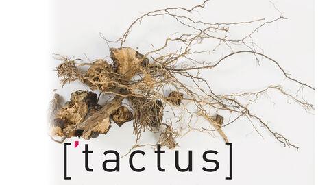 ['tactus]