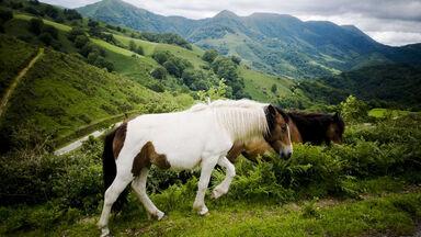 Beethoven 6: 'Pastorale'