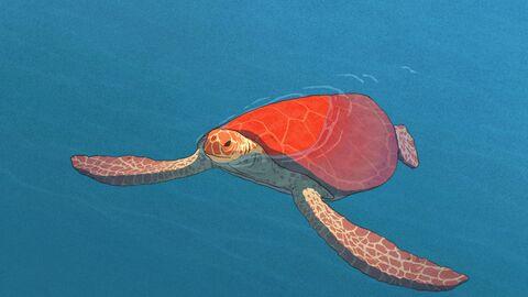 De Rode Schildpad